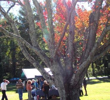 tree w tents